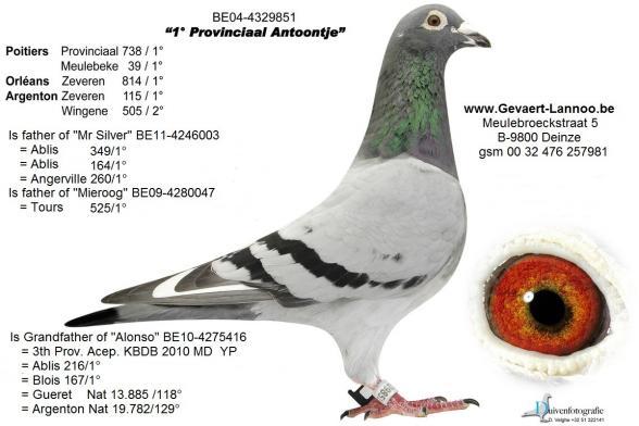 Provinciaal Antoontje 4329851/04