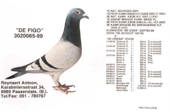 Figo Reynaert 3020065/99