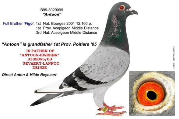 Antoon Willy Vanhoutte 3010099/99