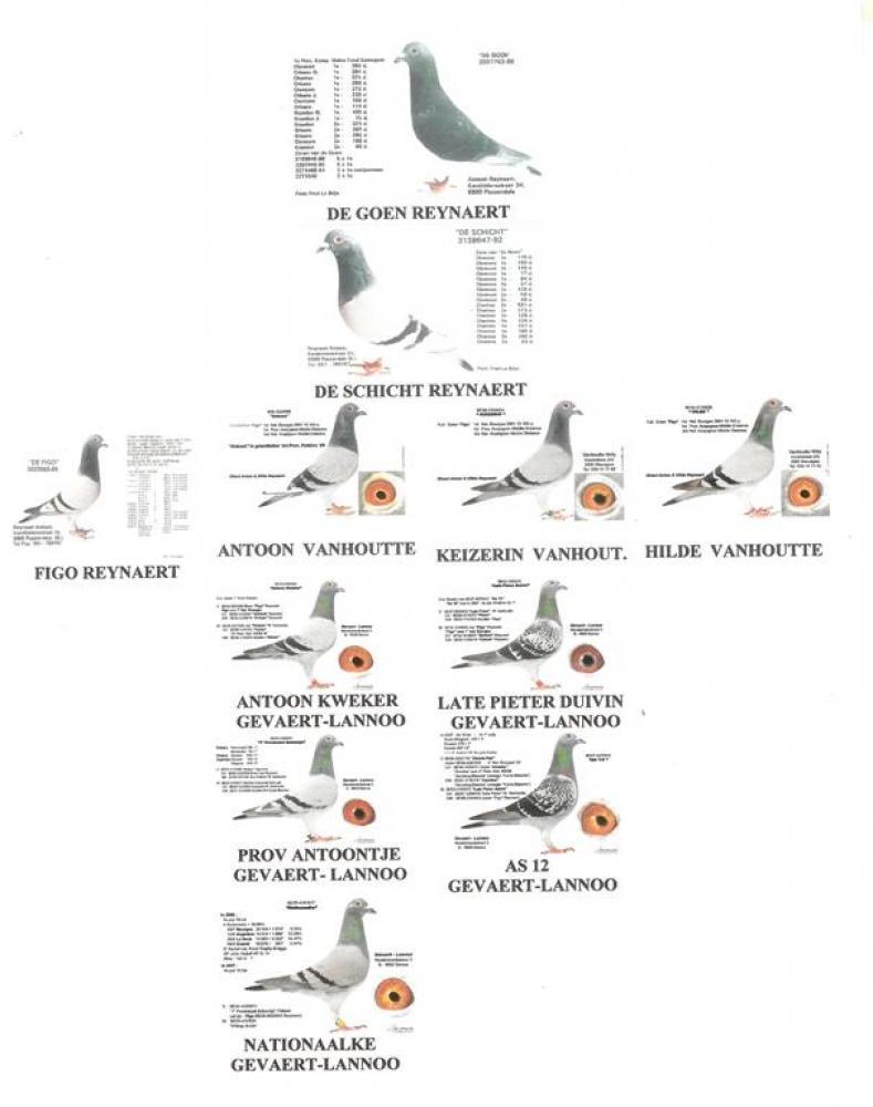 visuele stamboom familie Figo
