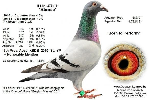 Alonso 4275416/10