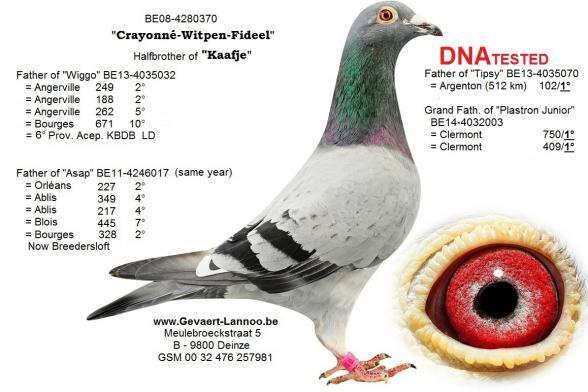 Crayonné-Witpen-Fideel   BE08-4280370