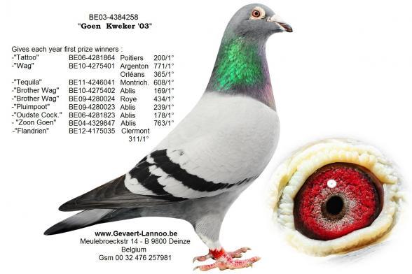 Goen Kweker       BE03-4384258