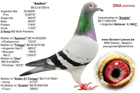 Amber  BE12-4175014