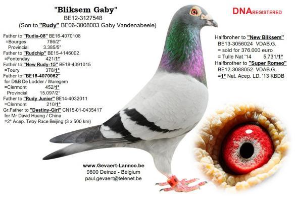 Bliksem Gaby          BE12-3127548