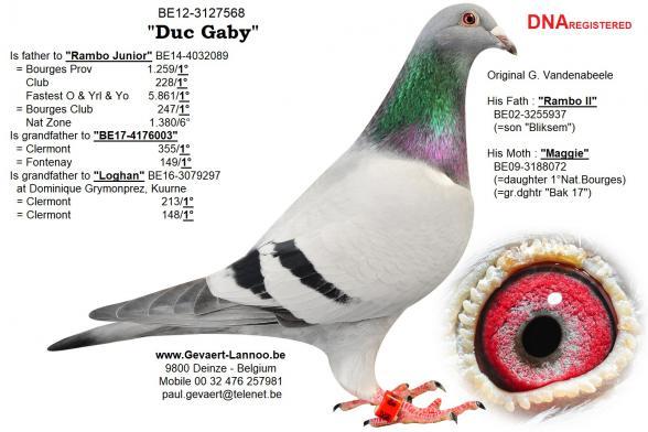 Duc Gaby BE12-3125768