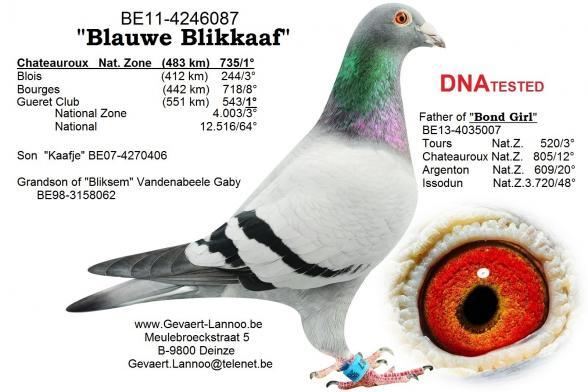Blauwe Blikkaaf BE11-4246087