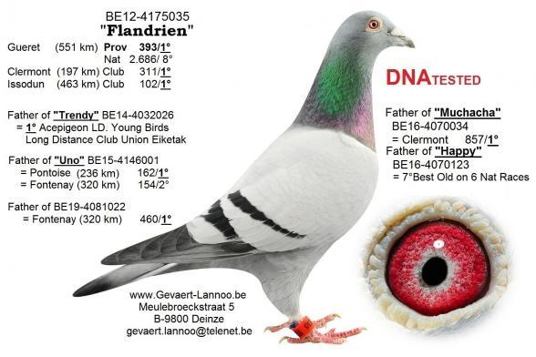Flandrien        BE12-4175035