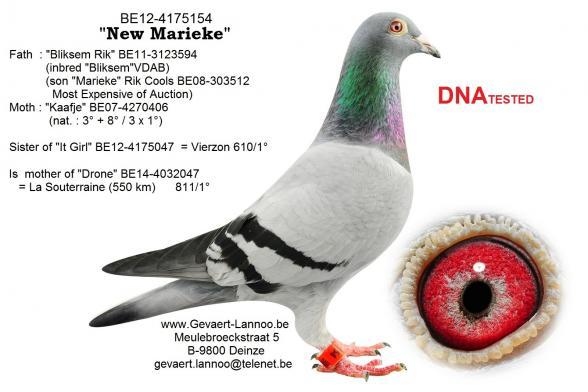 New Marieke BE12-4175154