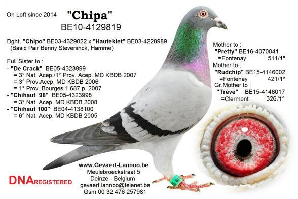 Chipa BE10-4129819