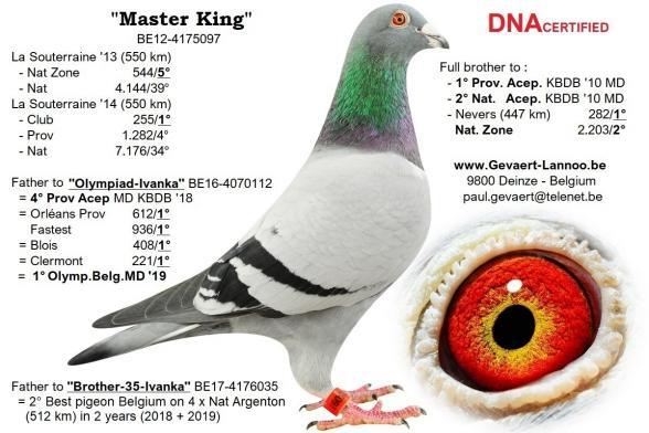Master King                        BE12-4175097