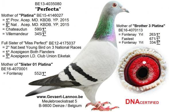 Perfecta BE13-4035080
