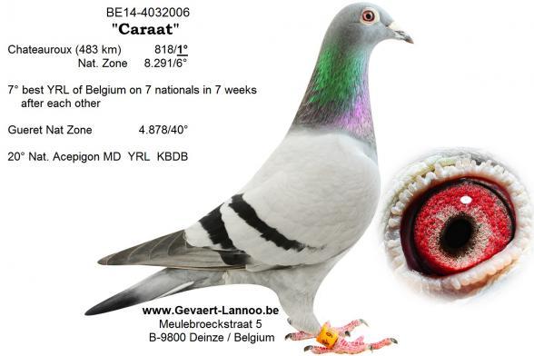 Caraat BE14-4032006