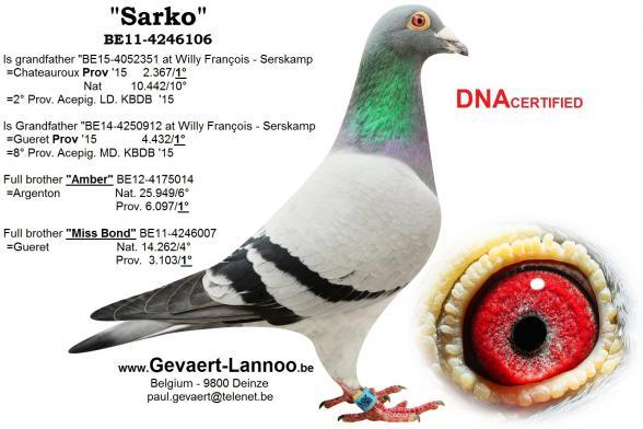 Sarko BE11-4246106
