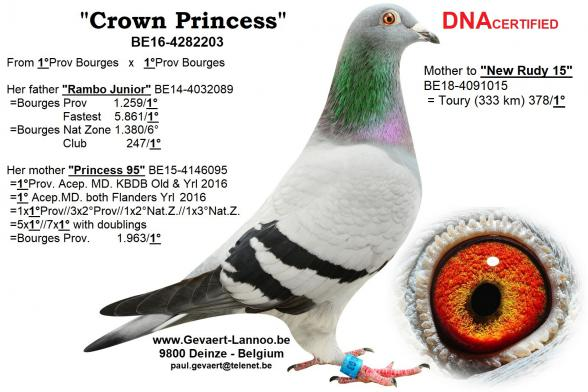 Crown Princess BE16-4282203