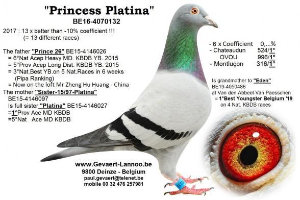 Princess Platina  BE16-4070132