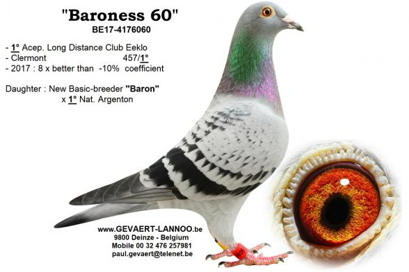 Baroness 60     BE17-4176060