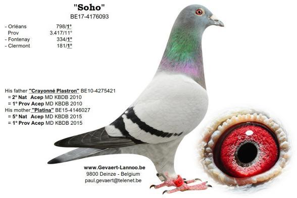 Soho BE17-4176093