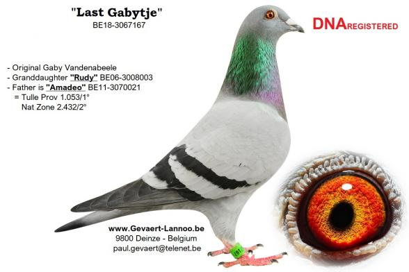 Last Gabytje BE18-3067167