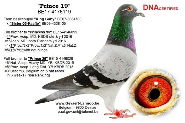 Prince 19          BE17-4176119