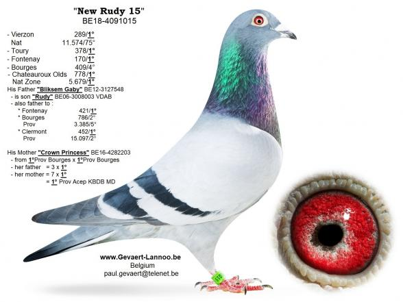 New Rudy 15     BE18-4091015