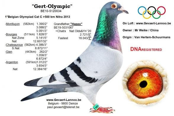 Gert Olympic        BE10-5120034