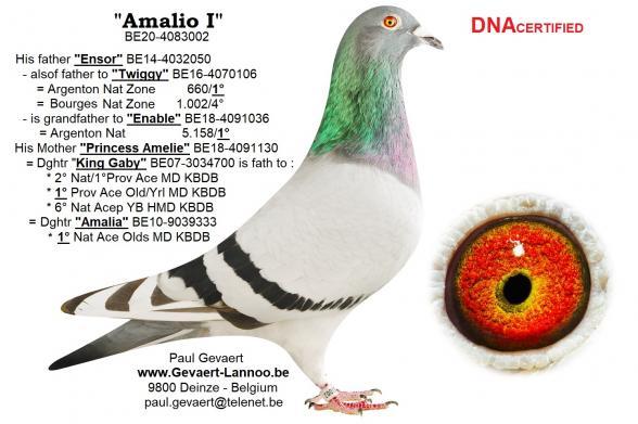 Amalio I                              BE20-4083002
