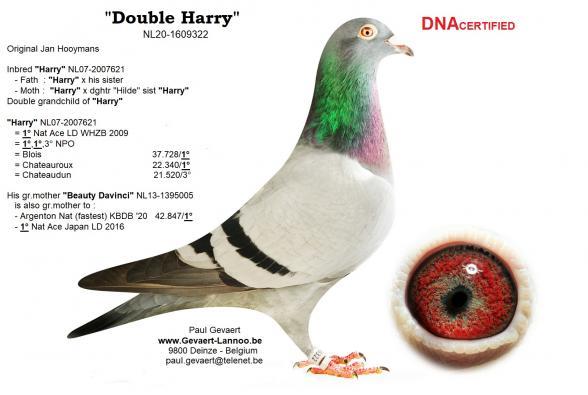 Double Harry                          NL20-1609322