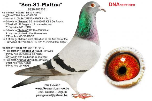 Son-81-Platina                        BE20-4083081