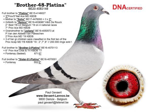 Brother-48-Platina                    BE20-4083148