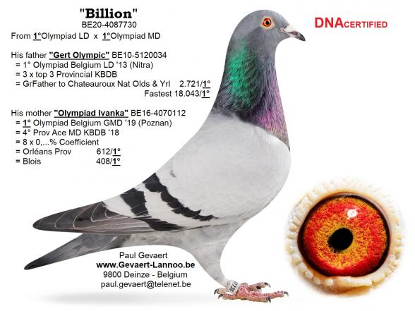 Billion                               BE20-4087730