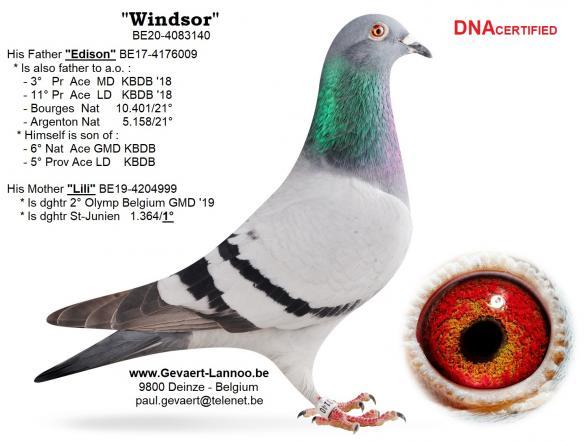 Windsor                               BE20-4083140